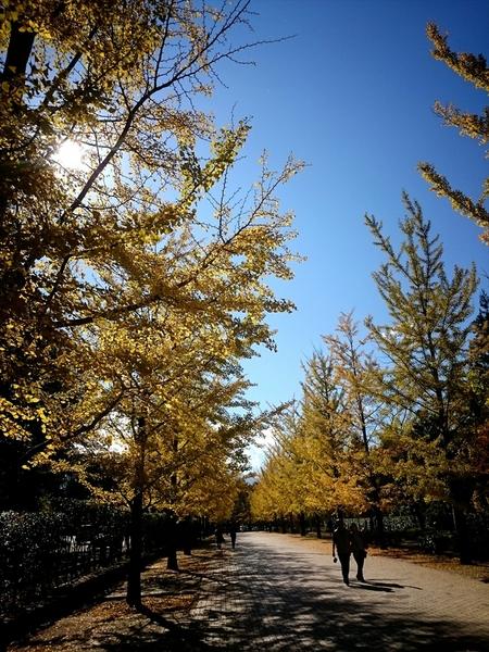 16-11-03-11-27-30-795_photo_r.jpg